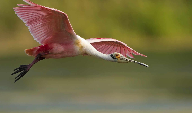 zhivotnye, birds, птица, природа, экран,,