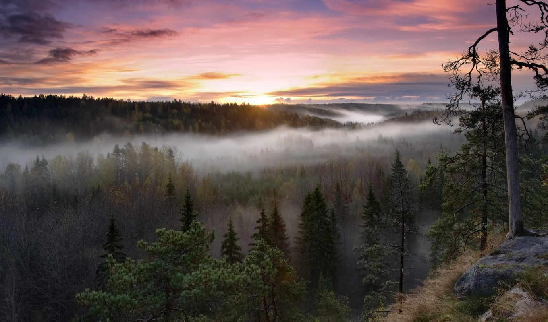 финляндия, national, park, нууксио, финский, noux,