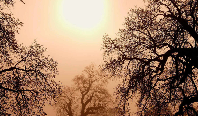 деревья, солнце, природа, туман, небо, pack, full, закат, пейзаж, картинка, amazing, код, dream, ветки, world,