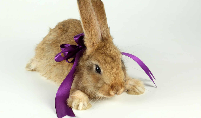 кролики, животные, марта, кроликами,