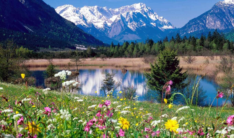 луга, альпийские, фотографий, лугам, альпийским,