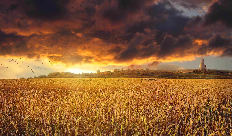 поле, пшеница, природа, небо, облаков, boggling,