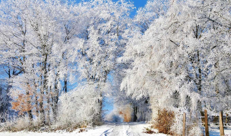 снег, дерево, winter, иней, oir