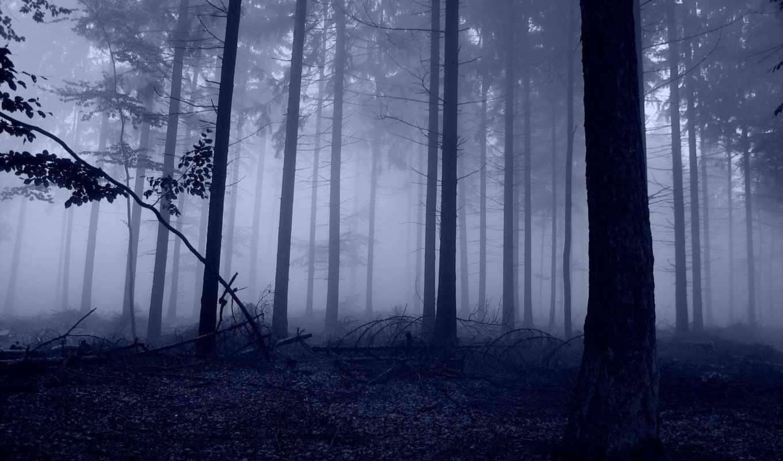 деревья, природа, лес, картинка, картинку, foggy, you,
