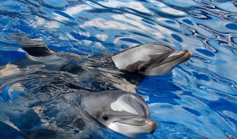 дельфины, животные, gdefon, море,