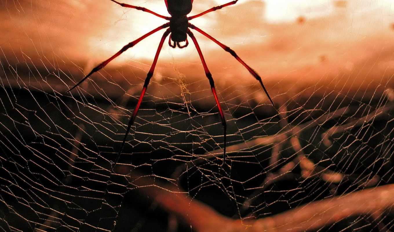 паук, web, spiders, скачиваний,