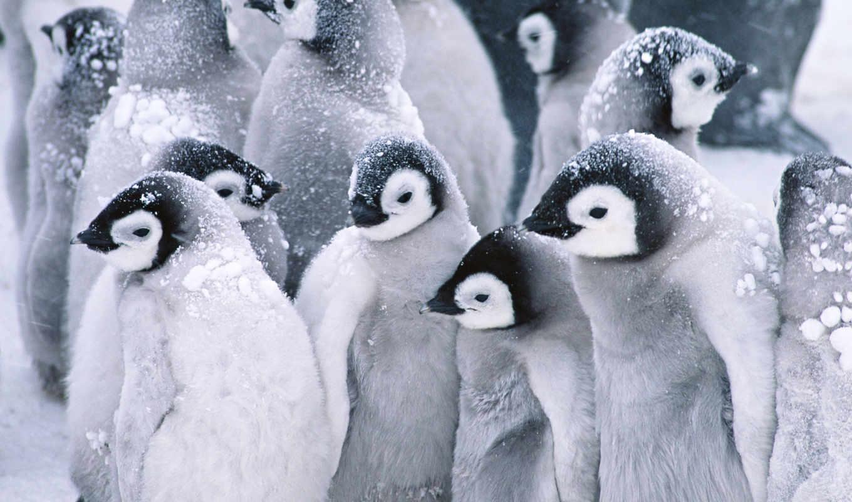пингвины, пингвинов, установленные, первое, умолчанию, видим, порядке, они, кем,