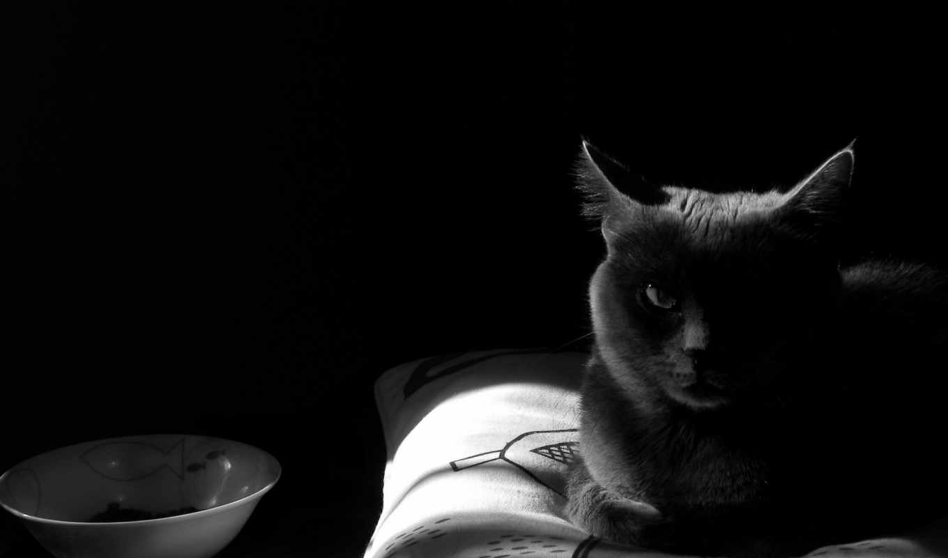 cats, кот, pillows, monochrome,