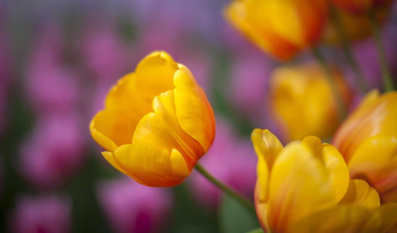цветы, admin, добавил, high, есть, quality, скачано, метки, природа, категория, desktop, girl,