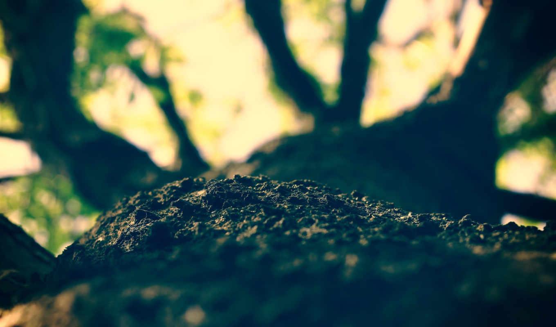 , дерево, кора, ветки,