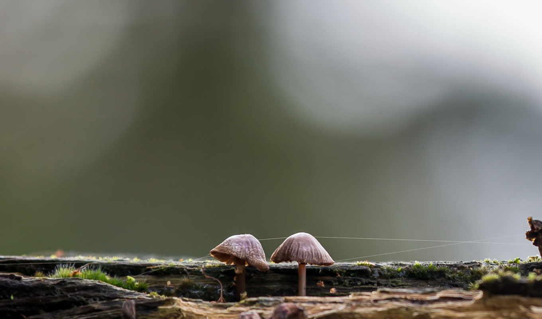 mushroom, infected, природа,