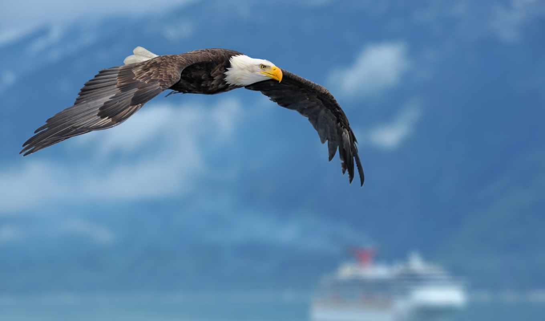 орлан, крылья, небо, птица, корабль, wings, фон, полет,