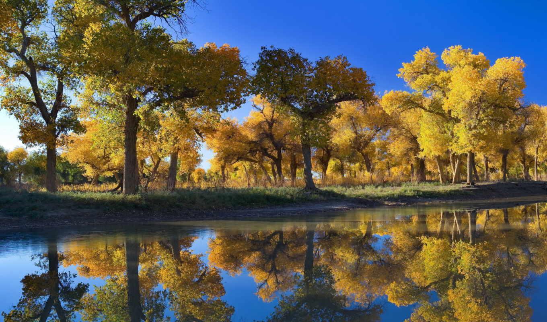 природа, осень, озеро, деревья,