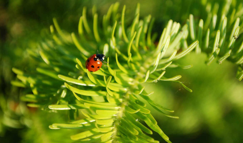joomla, que, plantillas, 叶上的瓢虫图片, kambi,