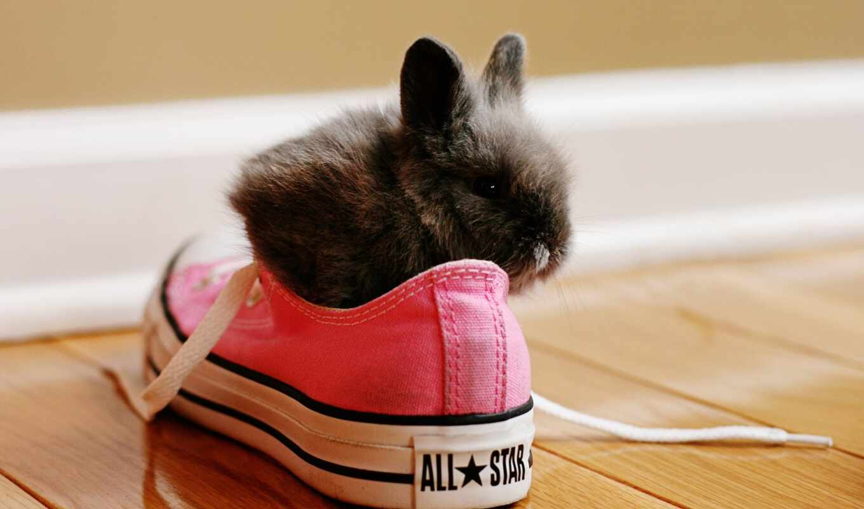 кролик, кеды, кружева, красная, туфли, zhivotnye,