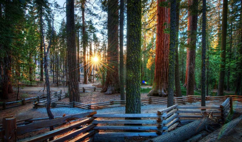 утро, лес, пейзажи -, rising, click, one, природа, программа, определит, admin, автоматически,