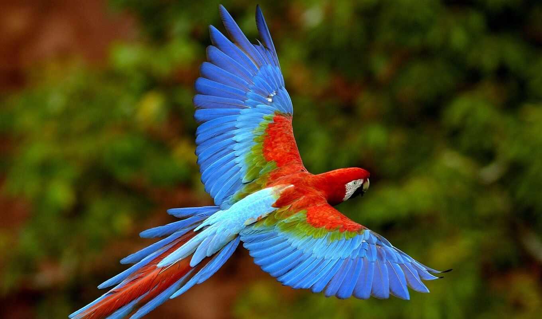 flying, parrot, wallpapers, wallpaper, hd, downloa