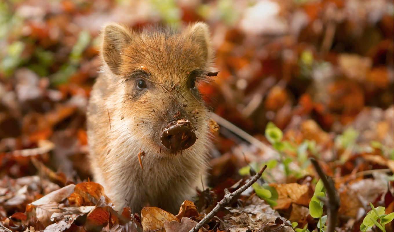 красивые, животные, природы, природа, красивая, фотографии, животных,
