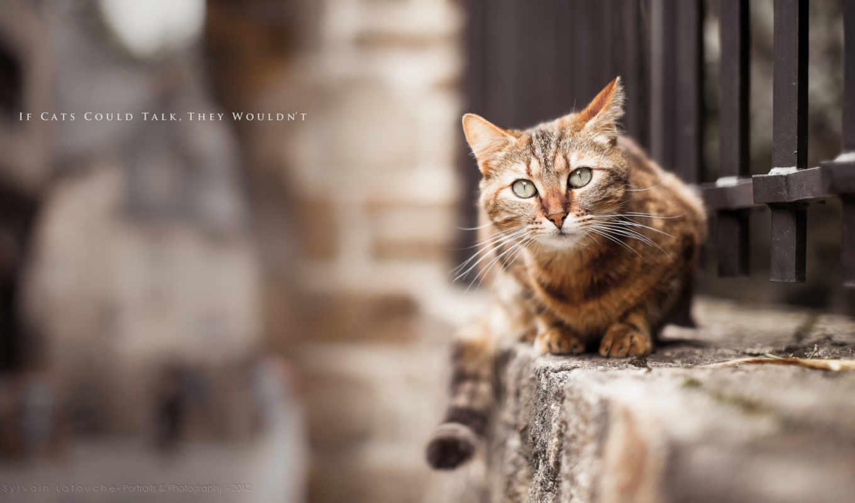 кот, забор, затаился