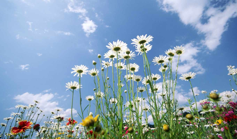 цветы, flowers, поле, небо, photos, colorful, blue, world, фото,