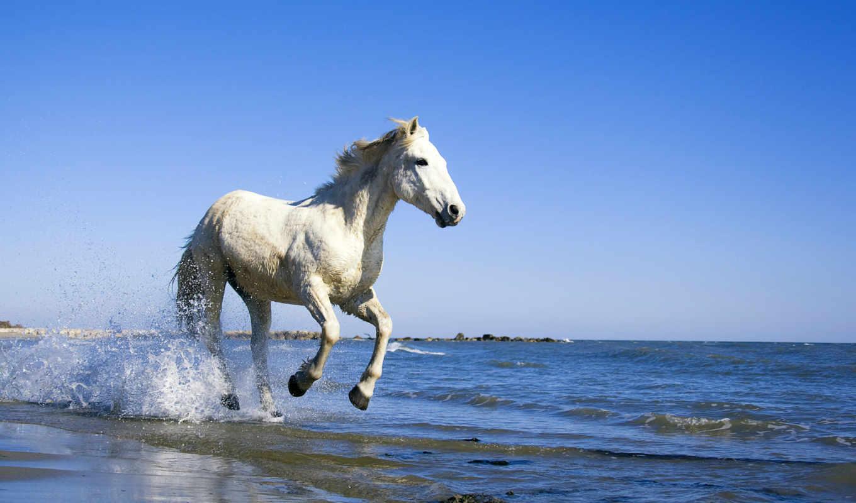 лошадь, берег, water, море, art,