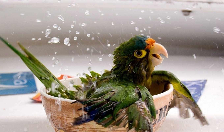 птицы, смешные, забавные, папугай,
