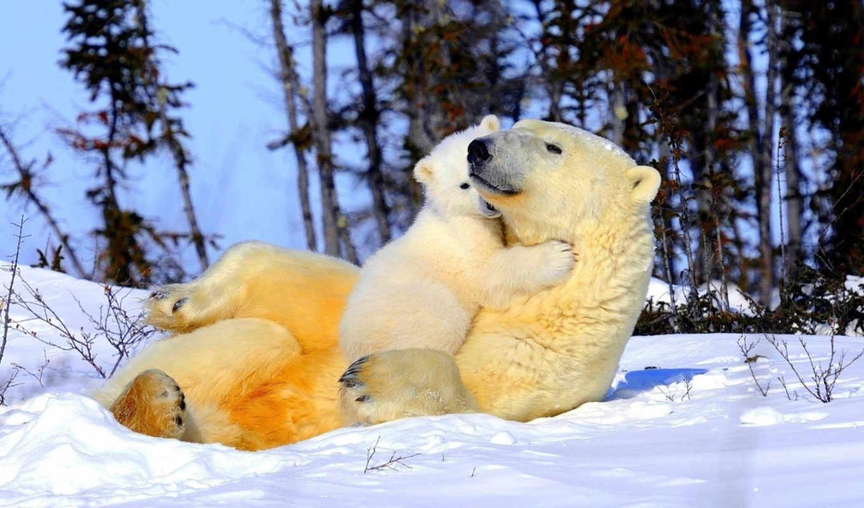природа, full, красивые, winter, картинок, фона, установки, зимы,