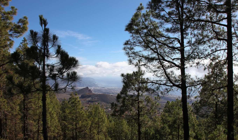 картинка, природа, trees, landscape, испания, tenerife,