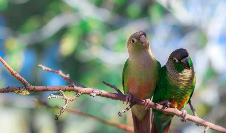 pinterest, birds, попугай, pin, images, птица,
