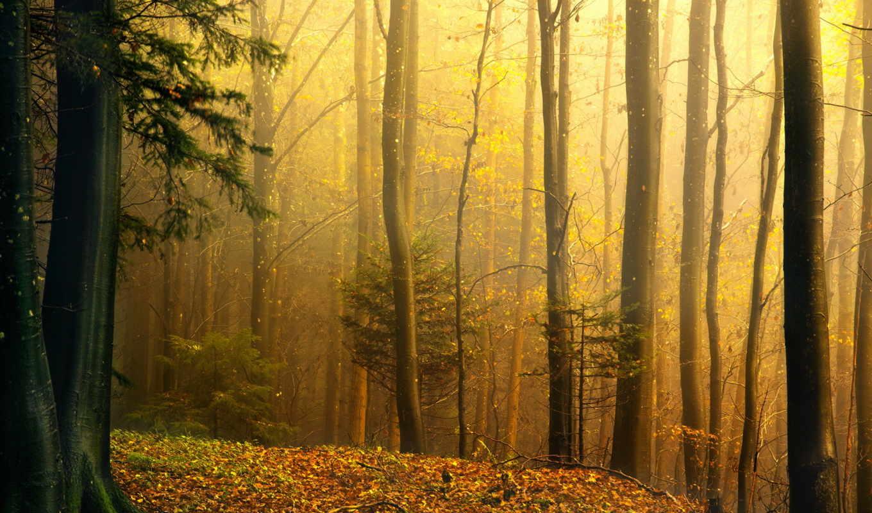 priroda, osen, les,
