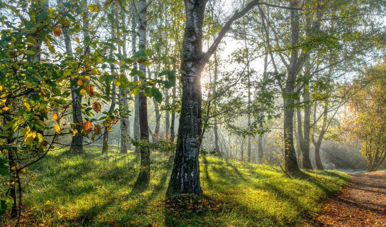 лес, сказочный, целикомв, сообщения, свой, community, лесу, марта, цитатник, прочитать, красивый,