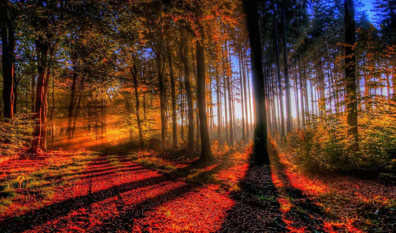,лучи, лес свет, деревья, осень, закат, Лес, туман, деревья, осень,