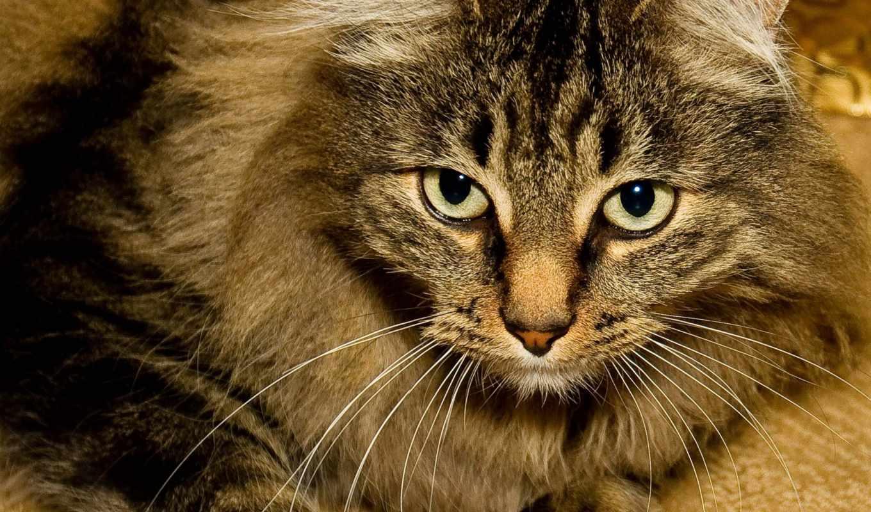 смотреть, animal, zhivotnye, кот, качестве,