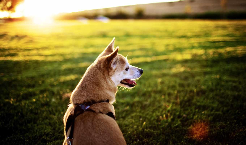 вероятнее, выздоравливай, тебя, целый, собака, ждет, world, когда,