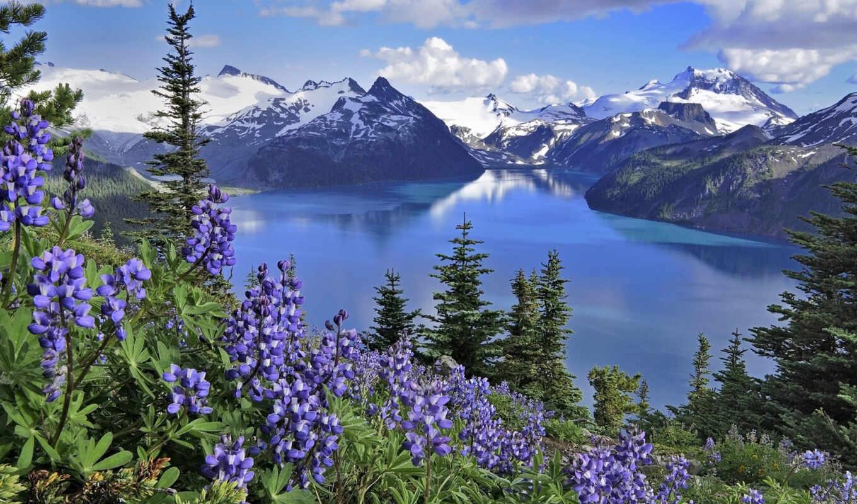 цветы, горы, landscape, озеро, весна, розовый, природа, flowers, осень,