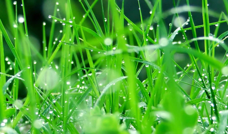grass, листья, капли, растение, зелень, desktop, rain, другие, seductive, number, картинку, смотрите, flowers, droplets, picture, free,