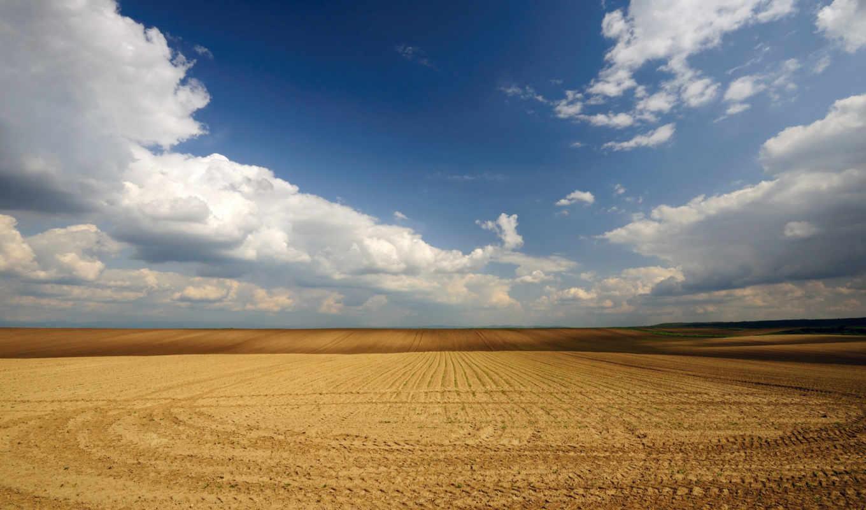 поле, природа, поля, пшеничное,