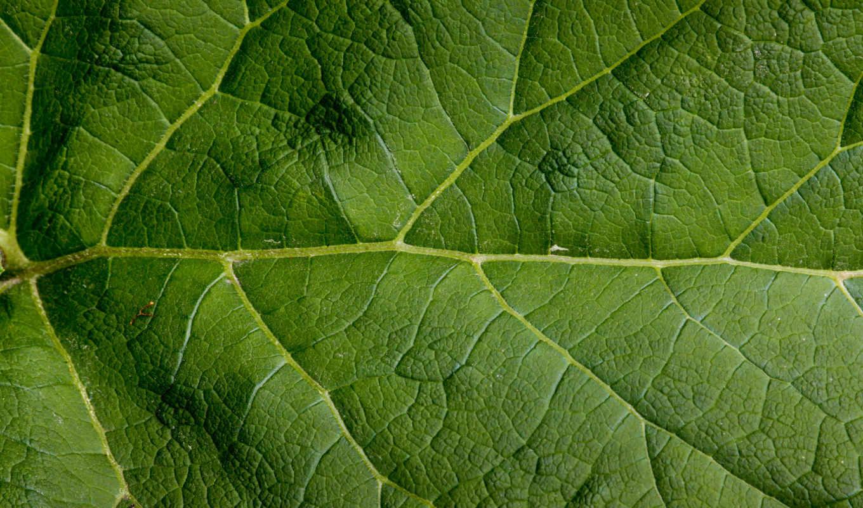 pattern, leaf, текстуры, зелёный, живопись,