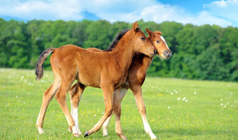 fondos, pantalla, bebés, caballos, gratis, lindo, animales, para, descargar,