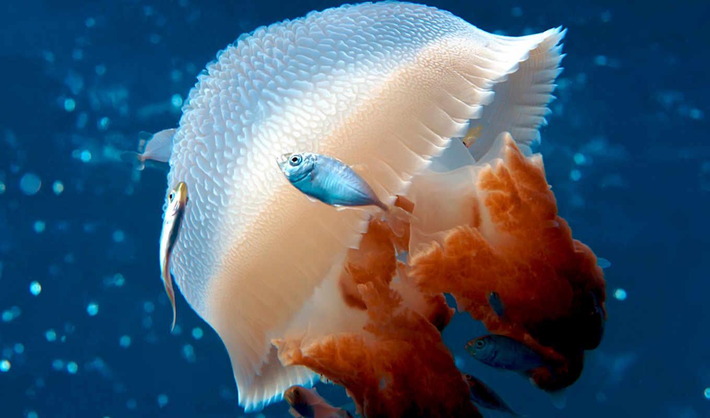 jellyfish, box, are, об, Мозаика,