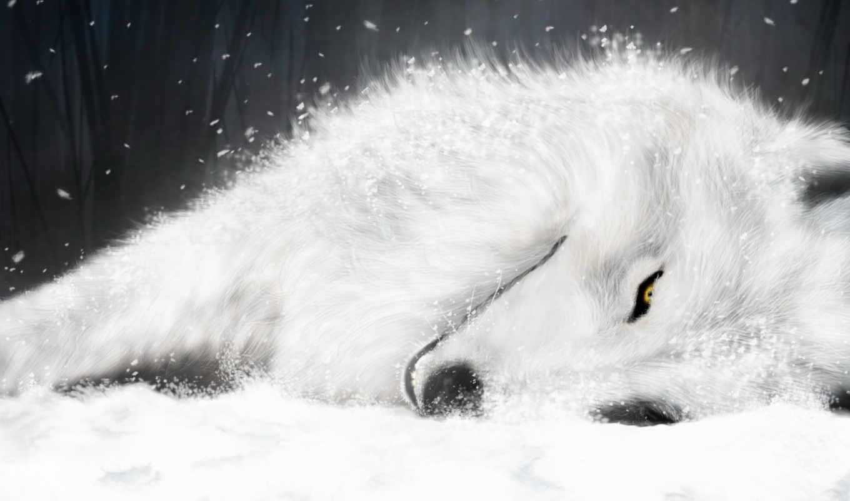 wolf, rain, wolfs, fox, white, ice, signature, аниме,