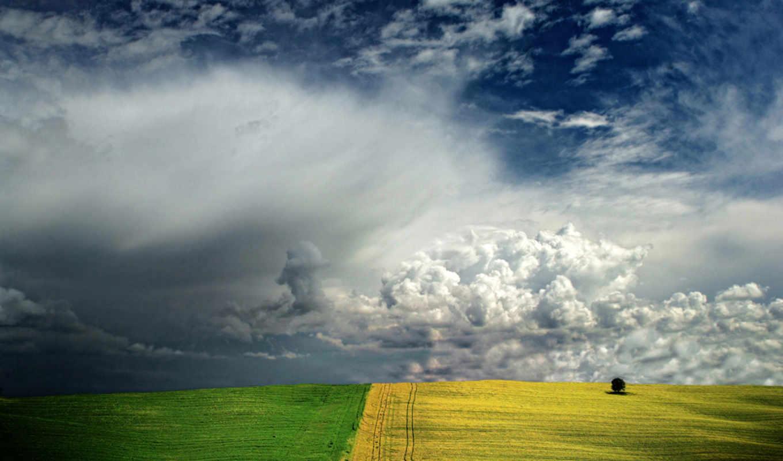 поле, yellow, блюда,