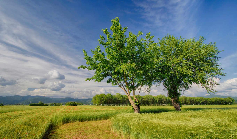 весна, природа, поле, поля, italy, деревья,