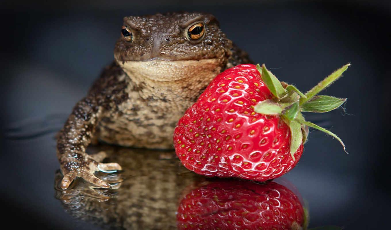 клубника, funny, strawberries, toad, ягода, inch, противоположности, ужасное, макро, прекрасное, картинка, картинку, resolutions,