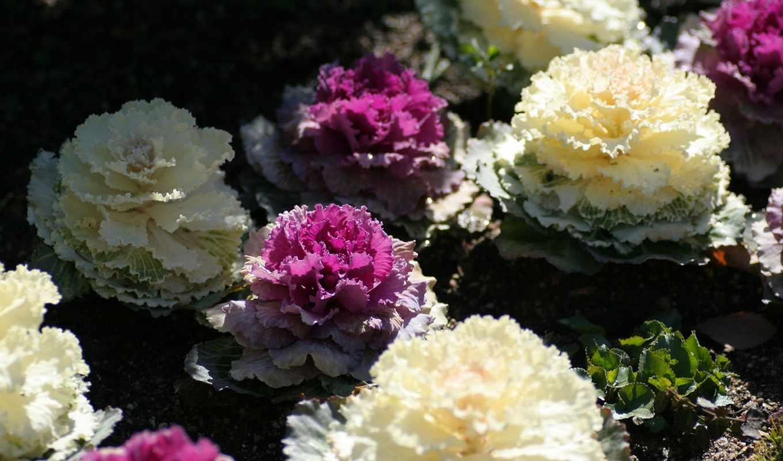 кружева, ipad, гладь, цветы,