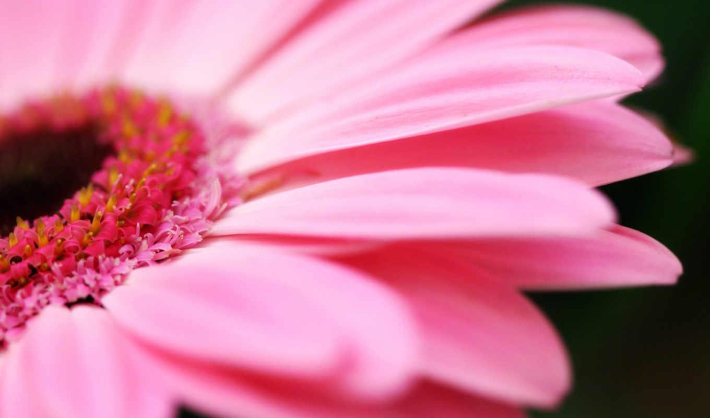 ipad, цветы, petals, iphone, free, flowers,
