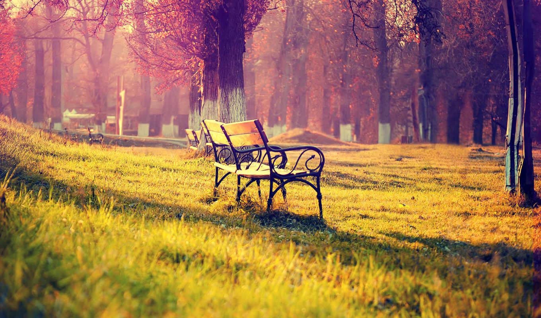 скамейка, park, парке, осень, природа, summer, базе, высоком, качестве,