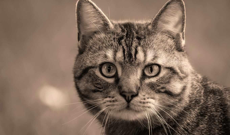 кот, id, котенок, pet, шляпа, cute, gato, white, спать