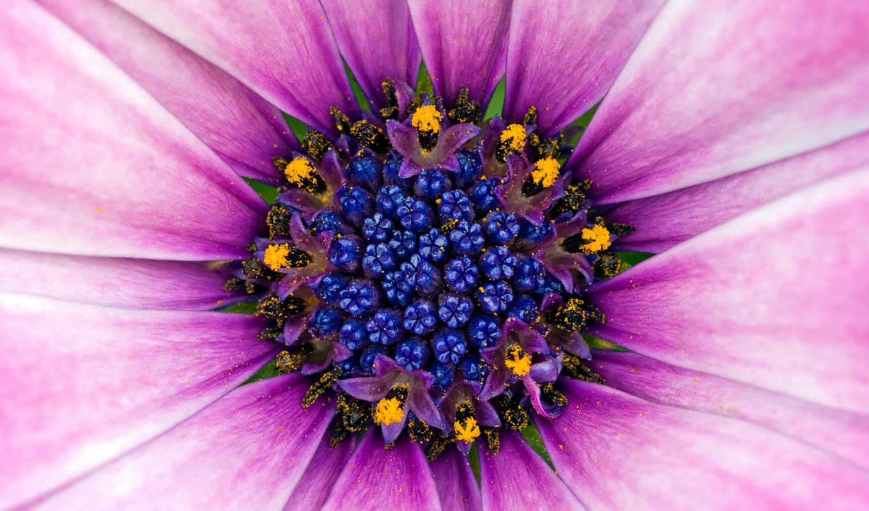 art, фэнтези, цветок, abstract, искусства, абстрактные, фиолет, пыльца, картинка, desktop,
