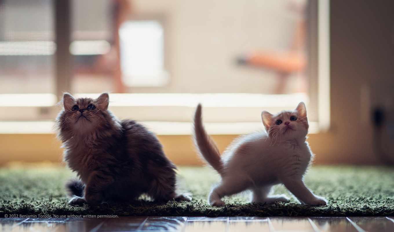дэйзи, дек, котенок, тороуда, бена, бен, her, torode, hannah, имени, владельца,